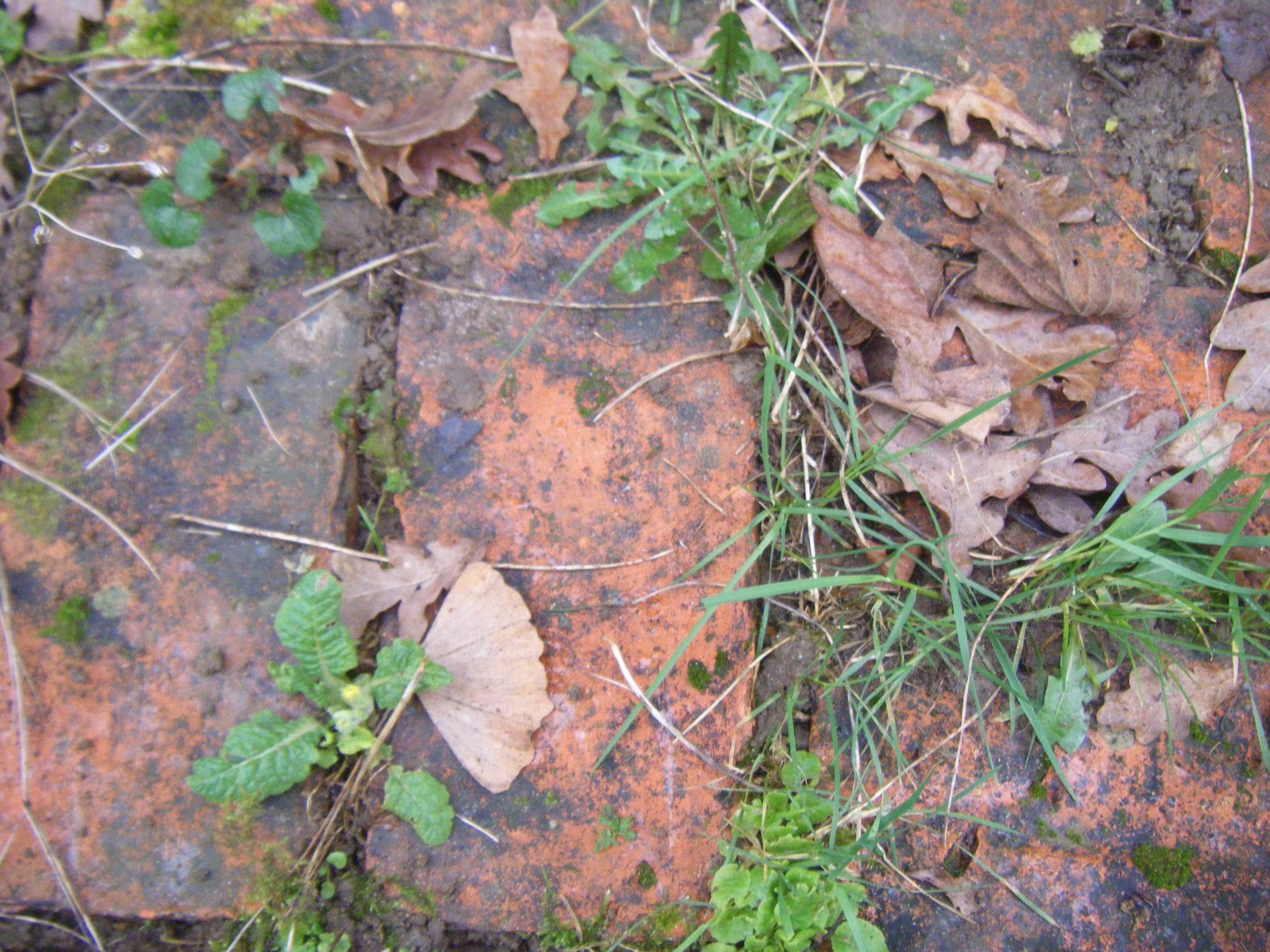 compost heap and path 005.JPG