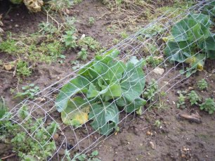 Allotments and puddles 026