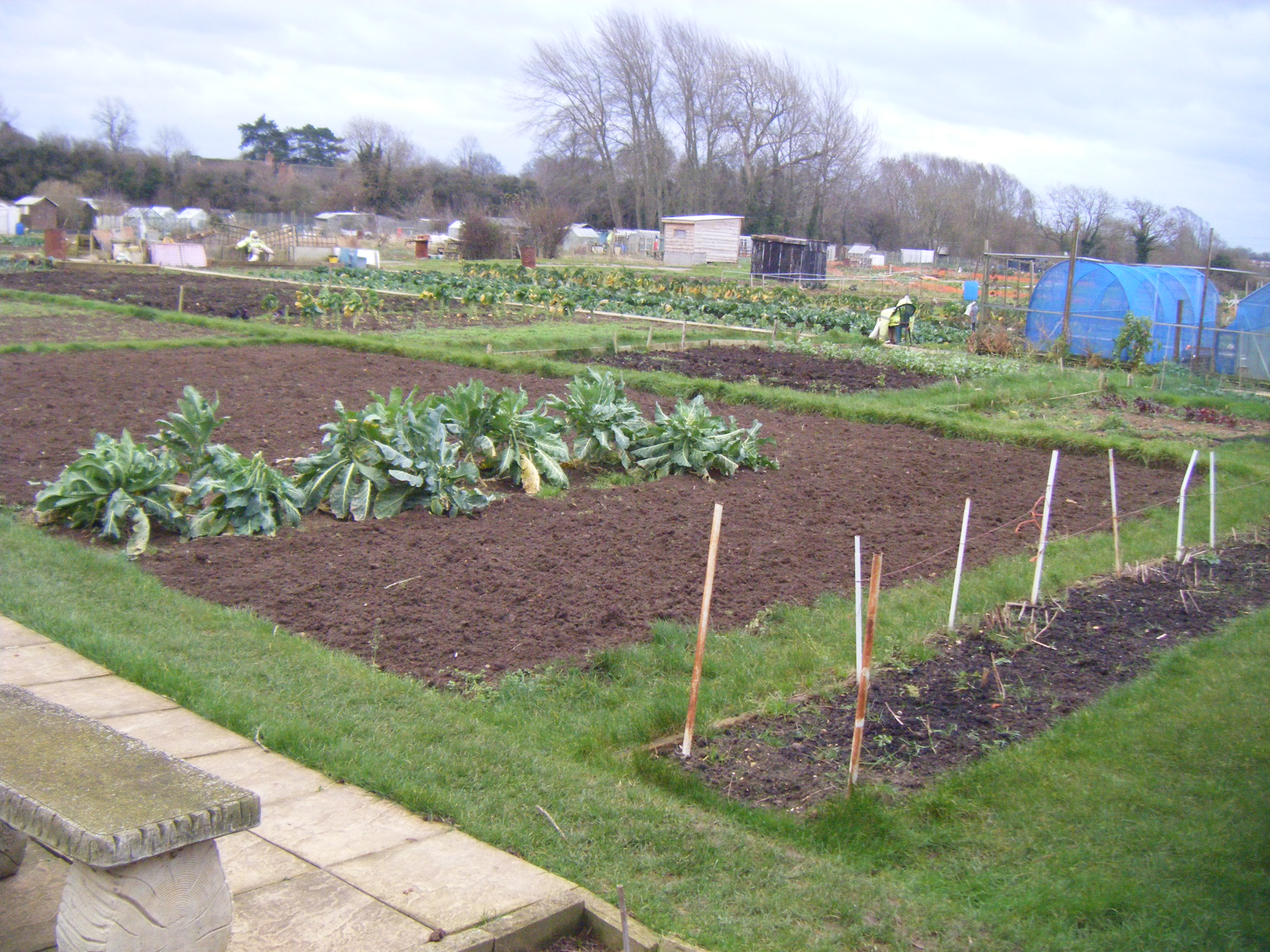 Allotments and puddles 045.JPG