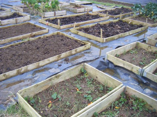 Allotments and puddles 050