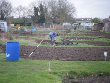 Allotments and puddles 058