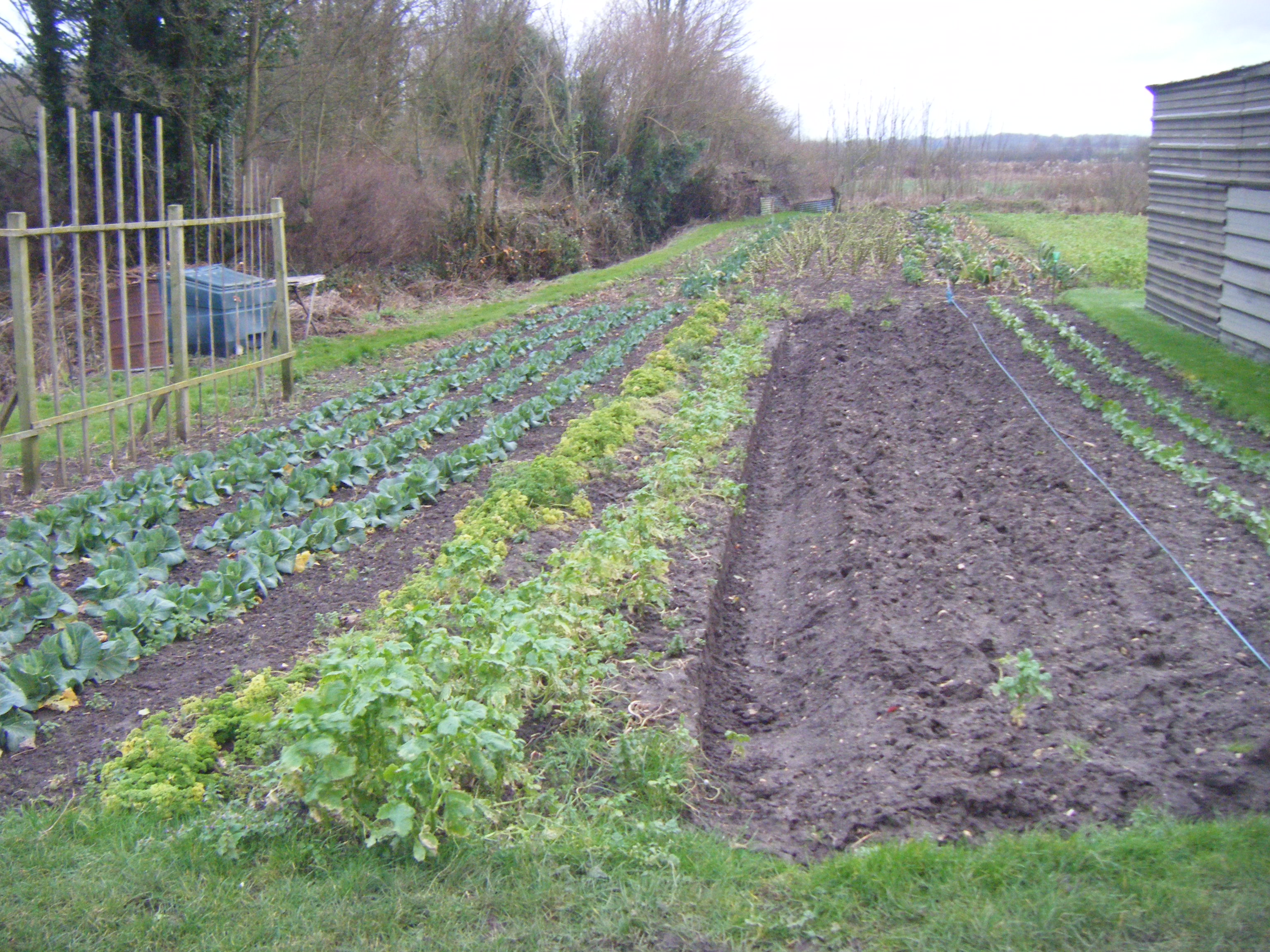 Allotments and puddles 064.JPG