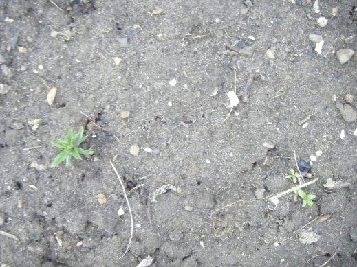 clay soil 001