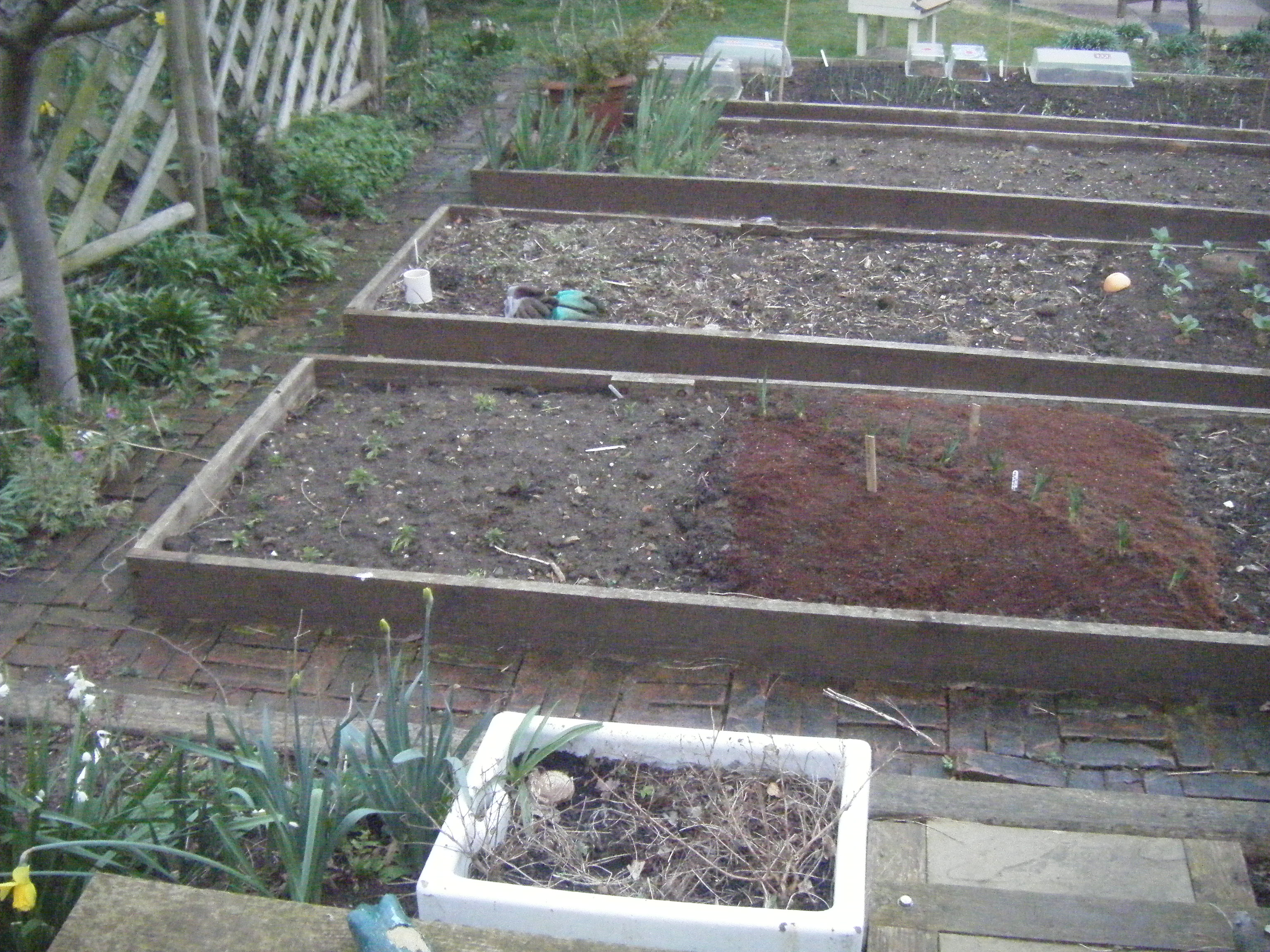 clay soil 003