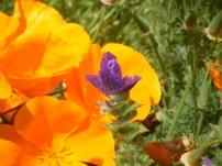 garden june16 008