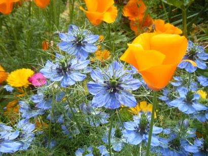 more june flowers 006