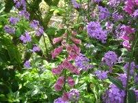 more june flowers 026